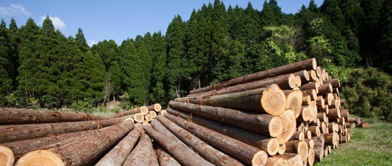 fából, millerpack csomagolóanyag blog, papírgyártás, papítermelés, fakitermelés, erdőgazdálkodás