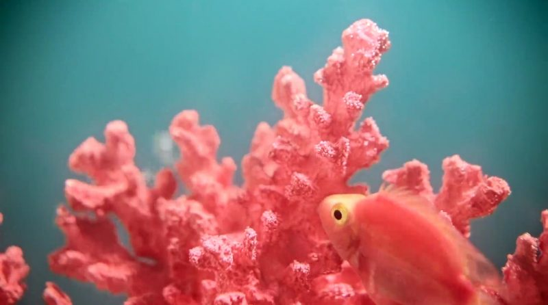 pantone, év színe, living coral
